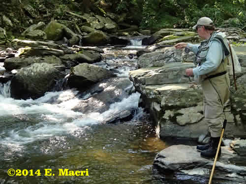 A Fly Angler fishes for wild trout on the Conewago Creek in Pennsylvania at www.riverscientist.com
