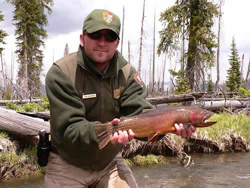 Wild Yellowstone River Cutthroat from Trout Stocking: Wild Trout Versus Stocked Trout at www.riverscientist.com
